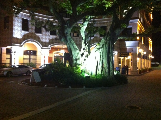 A Banyan tree