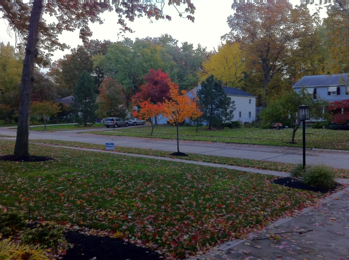 fall in our front yard