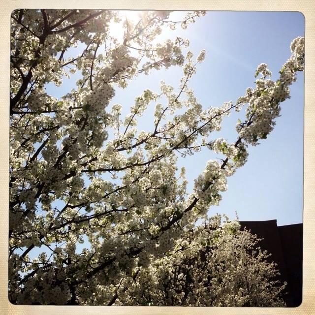 springtime coming...