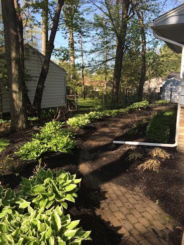 our shade garden 13-5-14