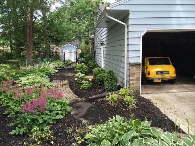 Back home - shade garden, and 1960 Mini