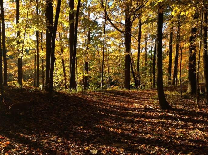 fall in NEohio