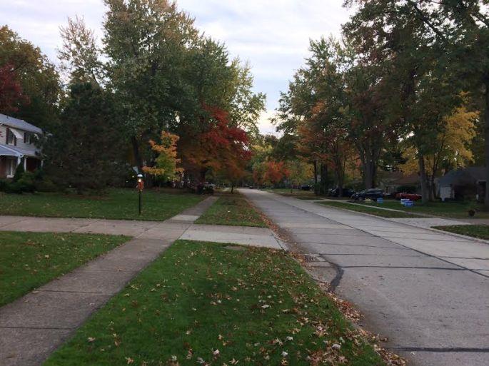 fall on Cherry Lane 2016